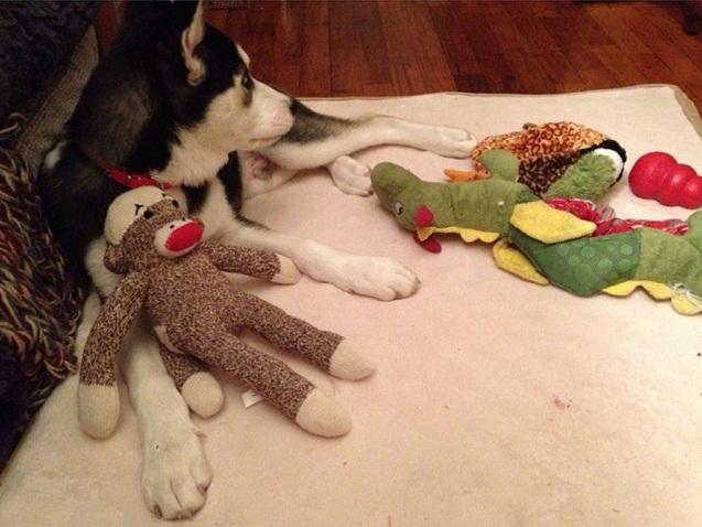 husky toys