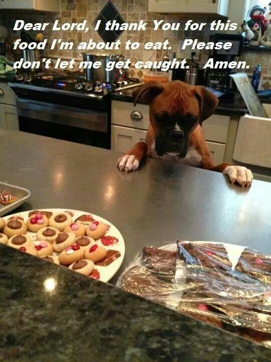 Dog Left Home Alone