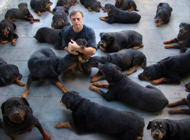 lots of rottweilers