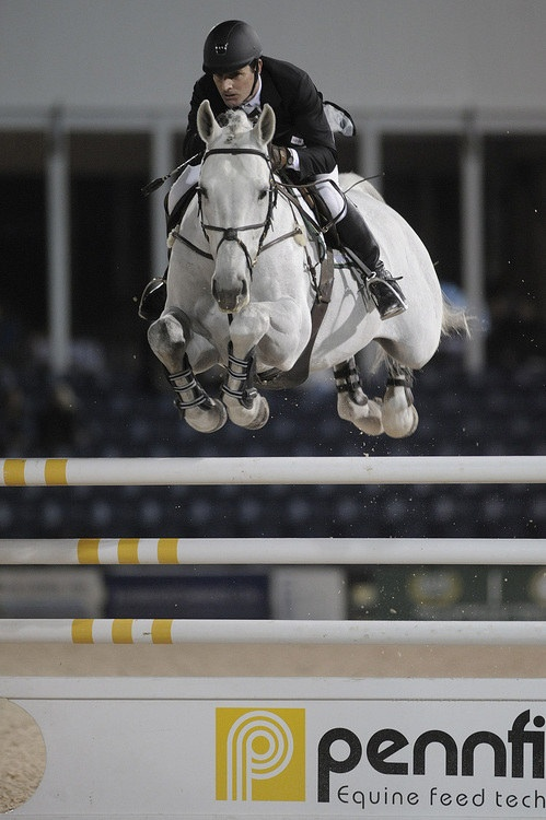 white horse fly