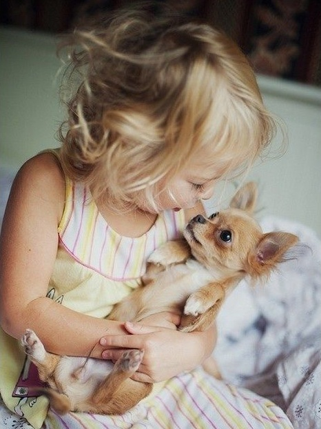 Pet Dogs and Children's Health : Chronic Disease Control and Prevention 4