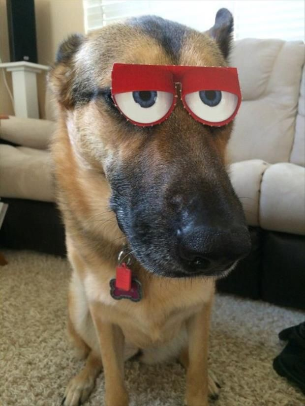 16 Reasons German Shepherds Are The Worst Indoor Dog Breeds Of All Time