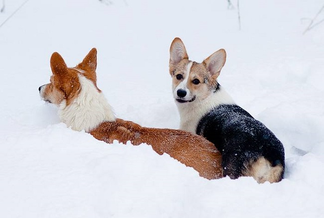 How To Care For Your Dog Across The Different Seasons 11