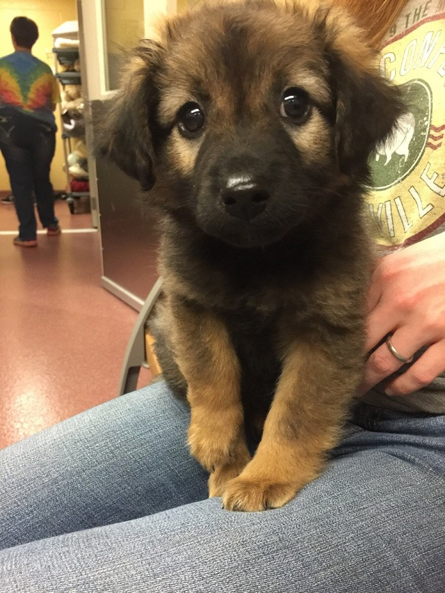 Cute Big Dog Cross Breeds