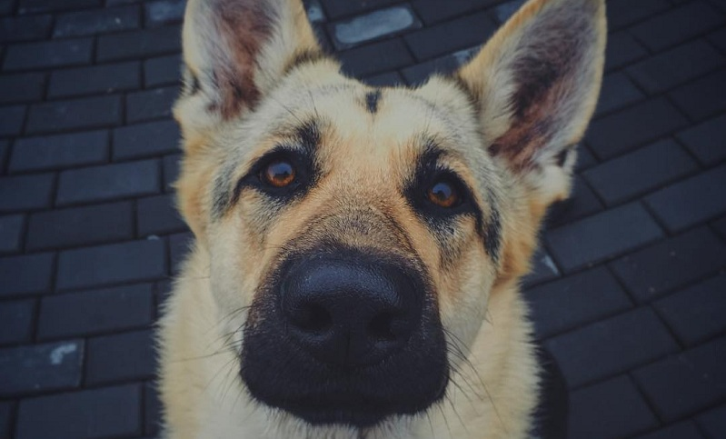Dogs with the Most Dangerous Bites
