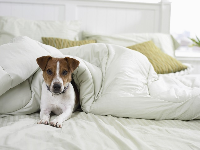 Pet Care: 10 Signs You Need To See The Vet ASAP 3