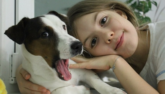 12 Realities That New Jack Russell Owners Must Accept