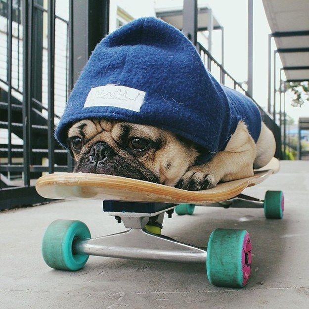 The 12 Most Pug Things That Have Ever Happened In The