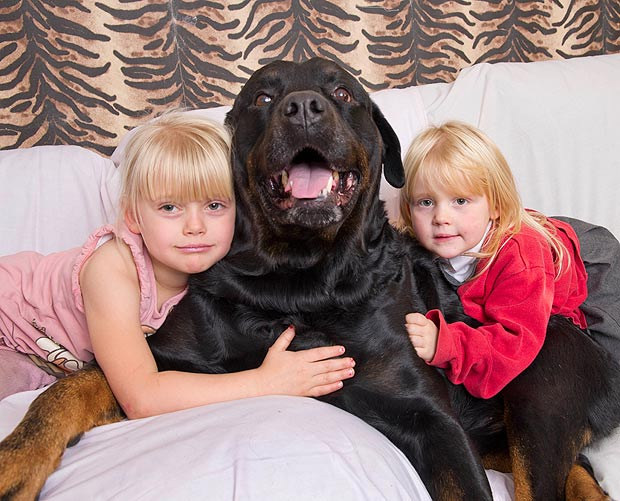 Pet Dogs and Children's Health : Chronic Disease Control and Prevention 3
