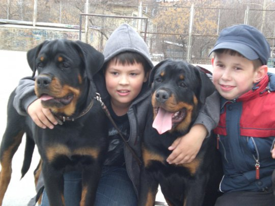 Pet Dogs and Children's Health : Chronic Disease Control and Prevention 2