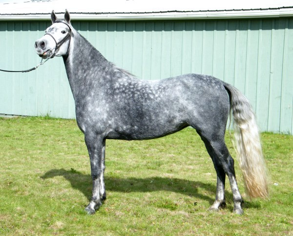 1.2 Friesian, 1.4 QH, 1.4 Percheron