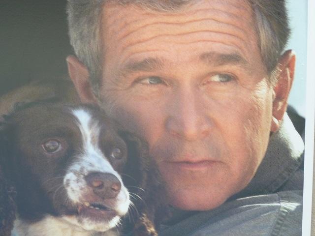 President Bush with English Springer Spaniel
