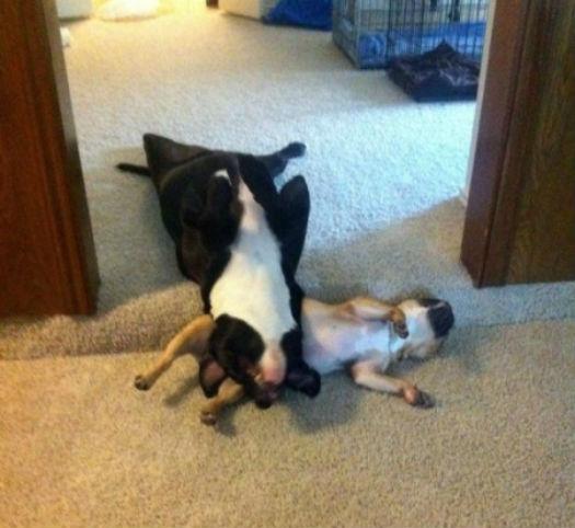 happy dogs sleep together