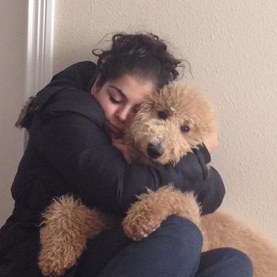 poodle hugs