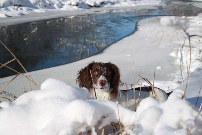 10 Best Springer Spaniel Dog Names