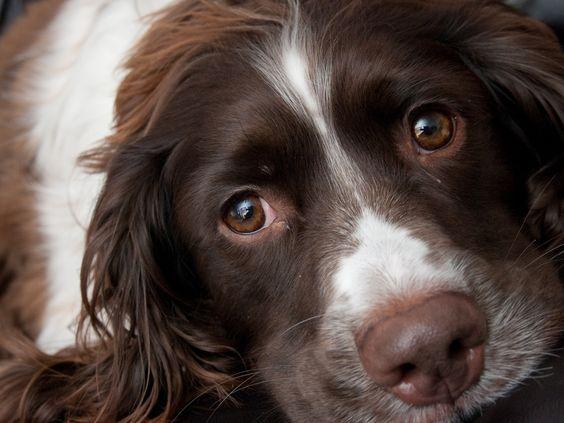 Can Dog Eat Truffles