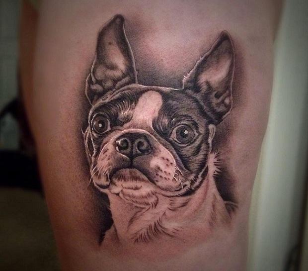 boston terrier tattoo style