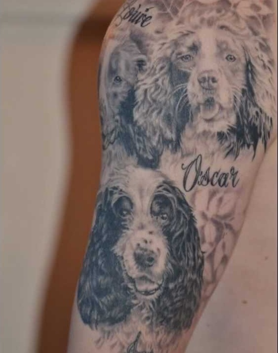 spaniel tattoo springer