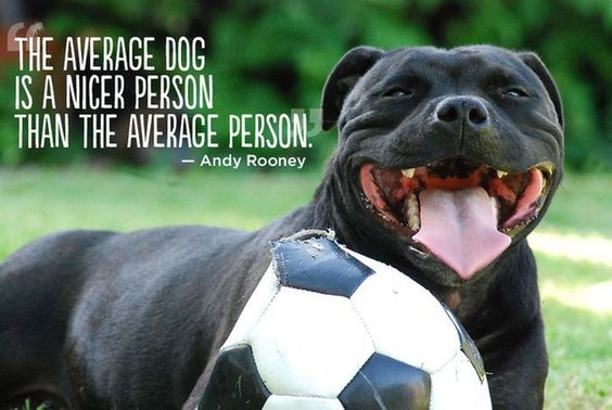 English Staffordshire Terrier. Inspirational Great pet quotes