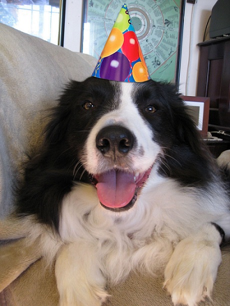 12 things that make border collies happy