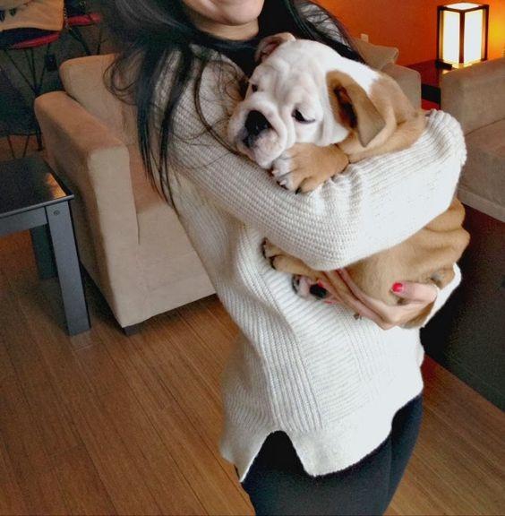 english bulldog hug
