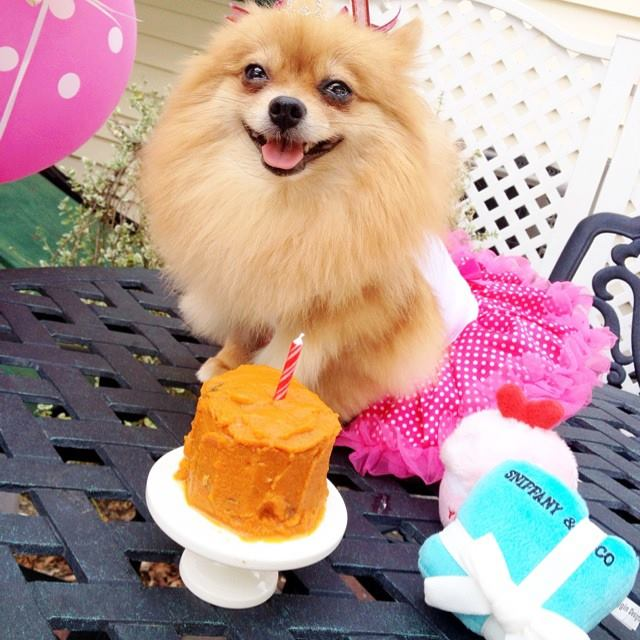 pomeranian birthday