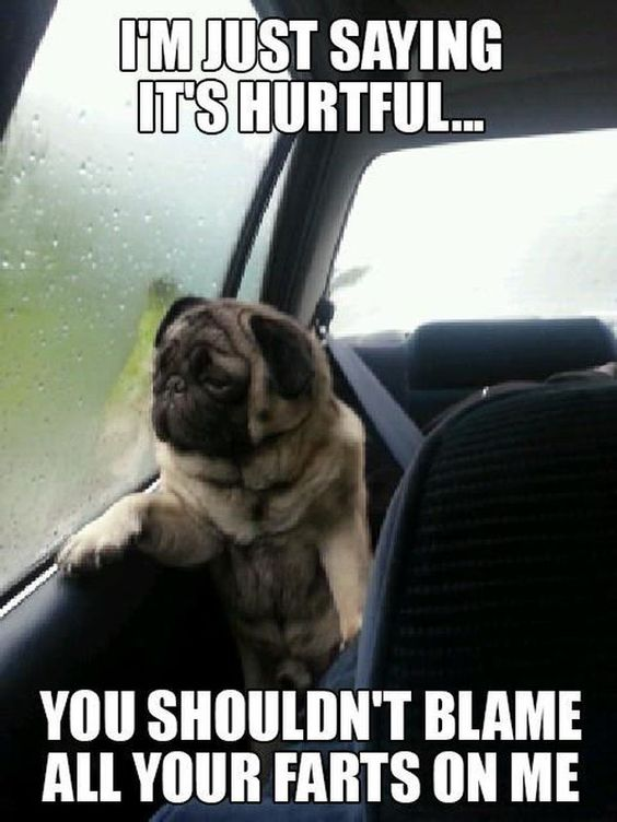 Funny Pug Jokes meme