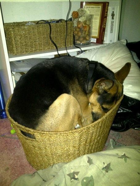 How To Put A Dog To Sleep At Home