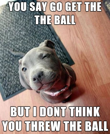 12 Dangerously Shocking Facts About Pit Bulls