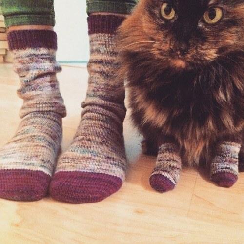 cat has socks