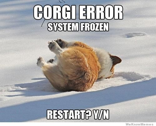 corgi-error-system-frozen meme