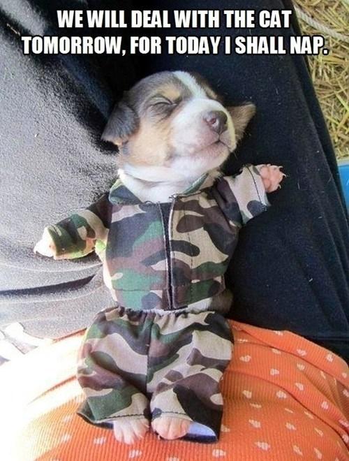 cute puppy meme corgi