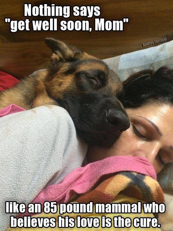 dog german shepherd sleep human
