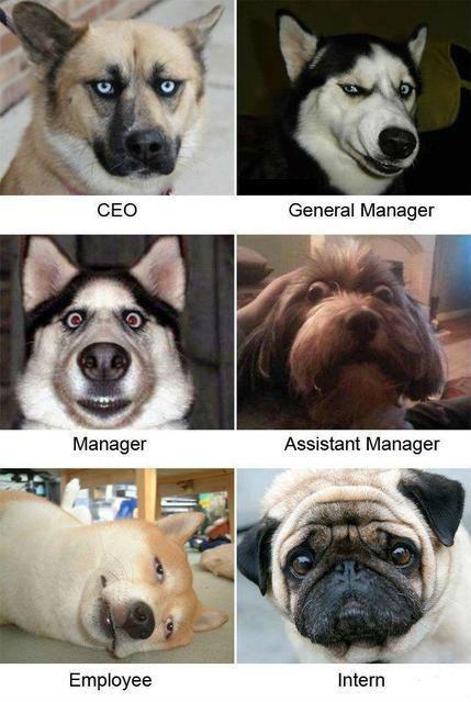 dog meme faces