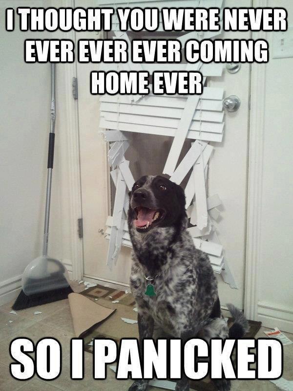 dog meme panicked