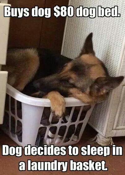 dog sleep in laundry basket
