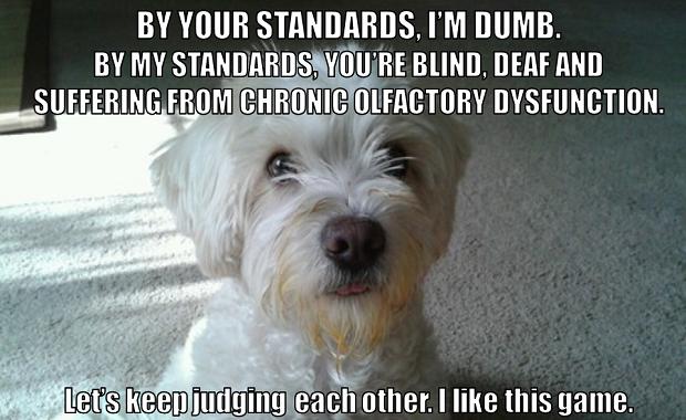 dog standards meme