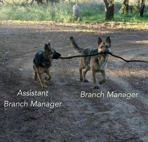 funny dog shepherds pics stick