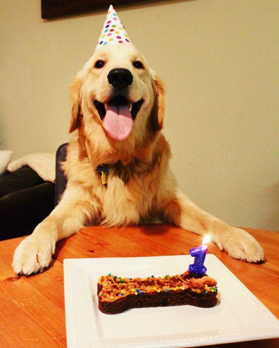 Happy Breed Dog Rescue