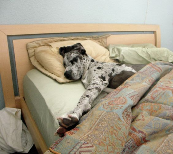 How Can You Put Your Dog To Sleep At Home