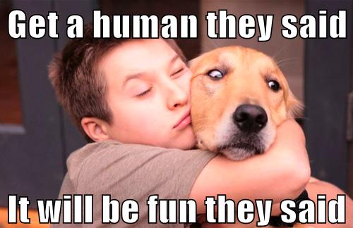 human dog meme fun