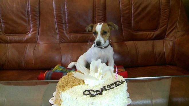 Birthday Cake Russell