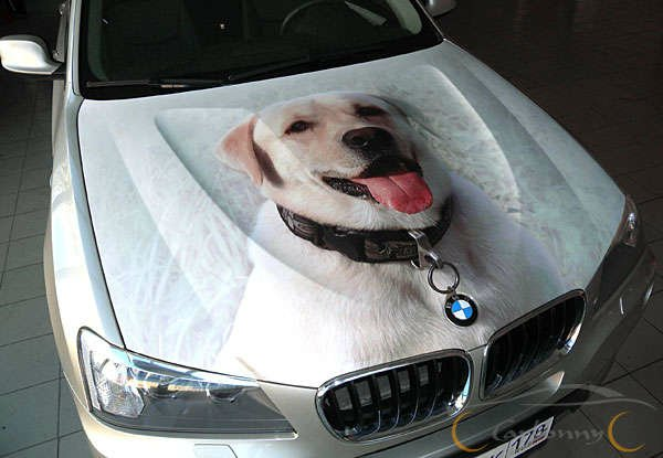 Dog Car Protector >> 24 Best Dog Airbrush Designs On Cars
