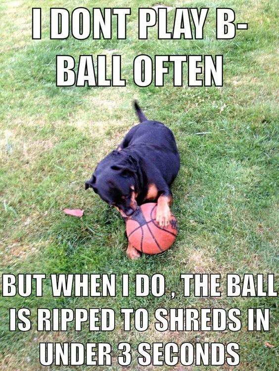 rottweiler dog meme
