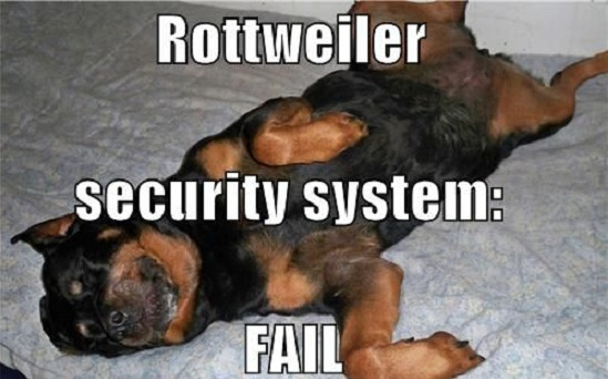 Funny Sleeping Meme : The most awkward rottweiler sleeping positions