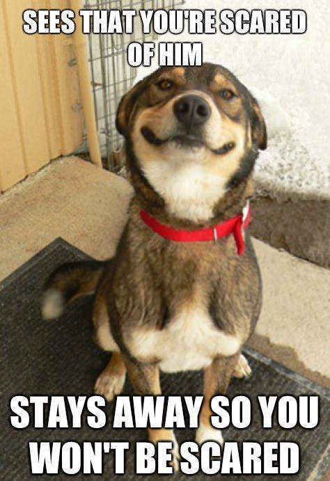 scare dog meme
