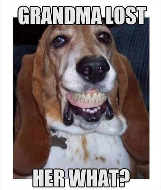 basset hound teeth meme