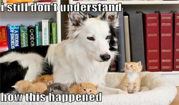 Top Funniest Memes Of All Time : Best border collie memes of all time