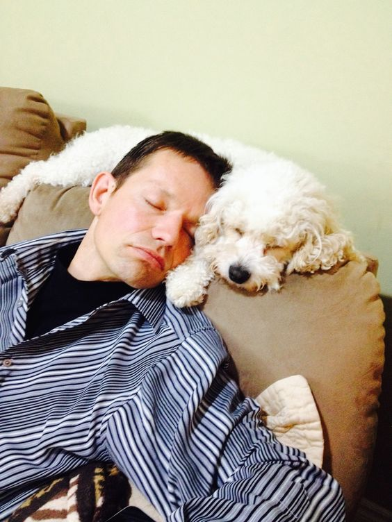 7 Things That Bichon Frise Owners Should Never Apologize For |