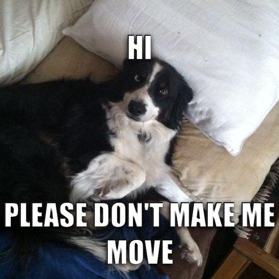 border collie funny meme 10 best border collie memes of all time